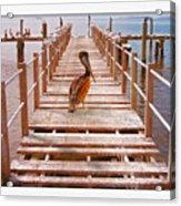 Cedar Key Wharf Acrylic Print