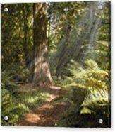 Cedar Path Acrylic Print