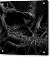 Cedar Roots Black And White Acrylic Print