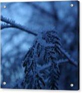 Cedars Of Ice II Acrylic Print