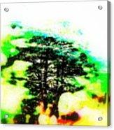 Cedars Of Lebanon  Acrylic Print