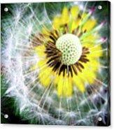 Celebration Of Nature Acrylic Print