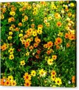 Celebration Of Yellows And Oranges Study 4 Acrylic Print