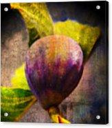 Celeste Fig Acrylic Print
