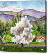 Celeste's Farm Acrylic Print