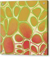 Cells Abstract Five Acrylic Print