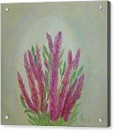 Celosia Dragon's Breath Acrylic Painting By Artist Rosie Foshee Acrylic Print