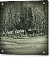 Cemetery In The Woods Acrylic Print