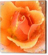 Center Of Orange Rose Acrylic Print
