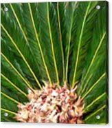 Centered Palm Acrylic Print