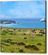 Central Coast Panorama - Hwy 1 Acrylic Print by Lynn Bauer