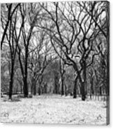 Central Park 1 Acrylic Print by Wayne Gill