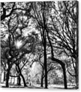 Central Park In Black And White Acrylic Print