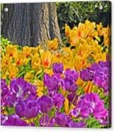 Central Park Tulip Display Acrylic Print