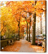 Central Park West Acrylic Print by Ariane Moshayedi