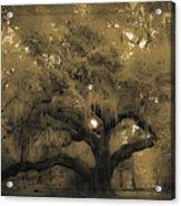 Centurion Oak Acrylic Print