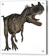 Ceratosaurus Dinosaur Roaring Acrylic Print