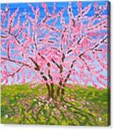 Cercis Tree, Oil Painting Acrylic Print