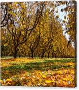 Ceres Orchard - Fall Acrylic Print