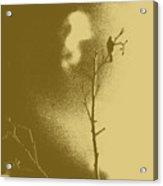 Chaffinch Tint Threshold Acrylic Print