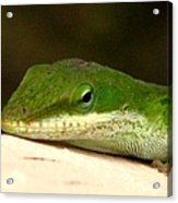 Chameleon 2 Acrylic Print