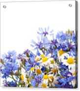 Chamomile And Cornflower Mix Acrylic Print