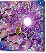Champagne Tabby Cat In Cherry Blossoms Acrylic Print