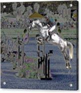 Champion Horse Jumper Acrylic Print