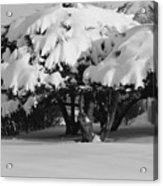 Chance Of Snow Acrylic Print