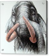 Chang Acrylic Print