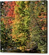 Changing Colours Of The Fall Acrylic Print