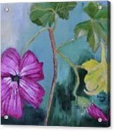 Channel Islands' Island Mallow Acrylic Print