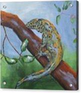 Channel Islands Night Lizard Acrylic Print