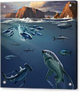 Channel Islands Sharks Acrylic Print