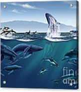 Channel Islands Whales Acrylic Print