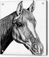 Charcoal Horse Acrylic Print