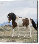Charger Acrylic Print by Nicole Markmann Nelson