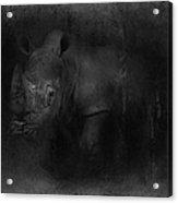 Charging Rhino No 02 Acrylic Print