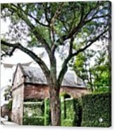 Charleston Church Street Live Oak And Ivy Acrylic Print