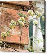 Charleston Climbing Rose Acrylic Print