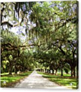 Charleston Oaks 1 Acrylic Print
