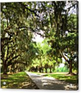 Charleston Oaks 3 Acrylic Print