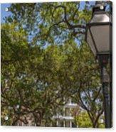 Charleston Through The Tree's Acrylic Print