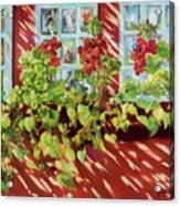 Charleston Window Boxes Acrylic Print