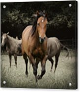 Charlie And Friends Acrylic Print by Jana Goode