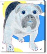 Charlie The Bulldog Acrylic Print