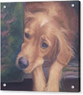 Charlie's In The Doghouse Acrylic Print