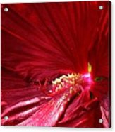 Charlotte Beach Red Hibiscus Acrylic Print