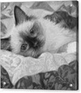 Charming - Black And White Acrylic Print