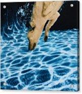 Chase 2 Acrylic Print by Jill Reger